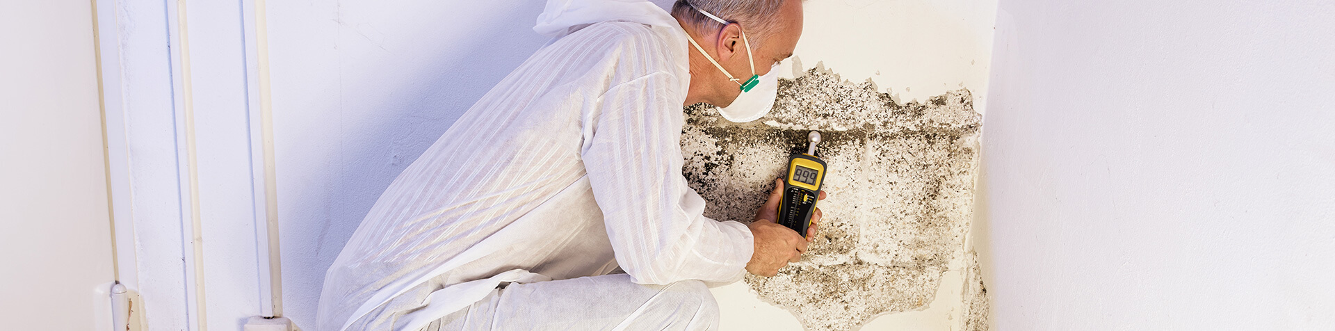 Banner image for Mold Remediation & Cleanup